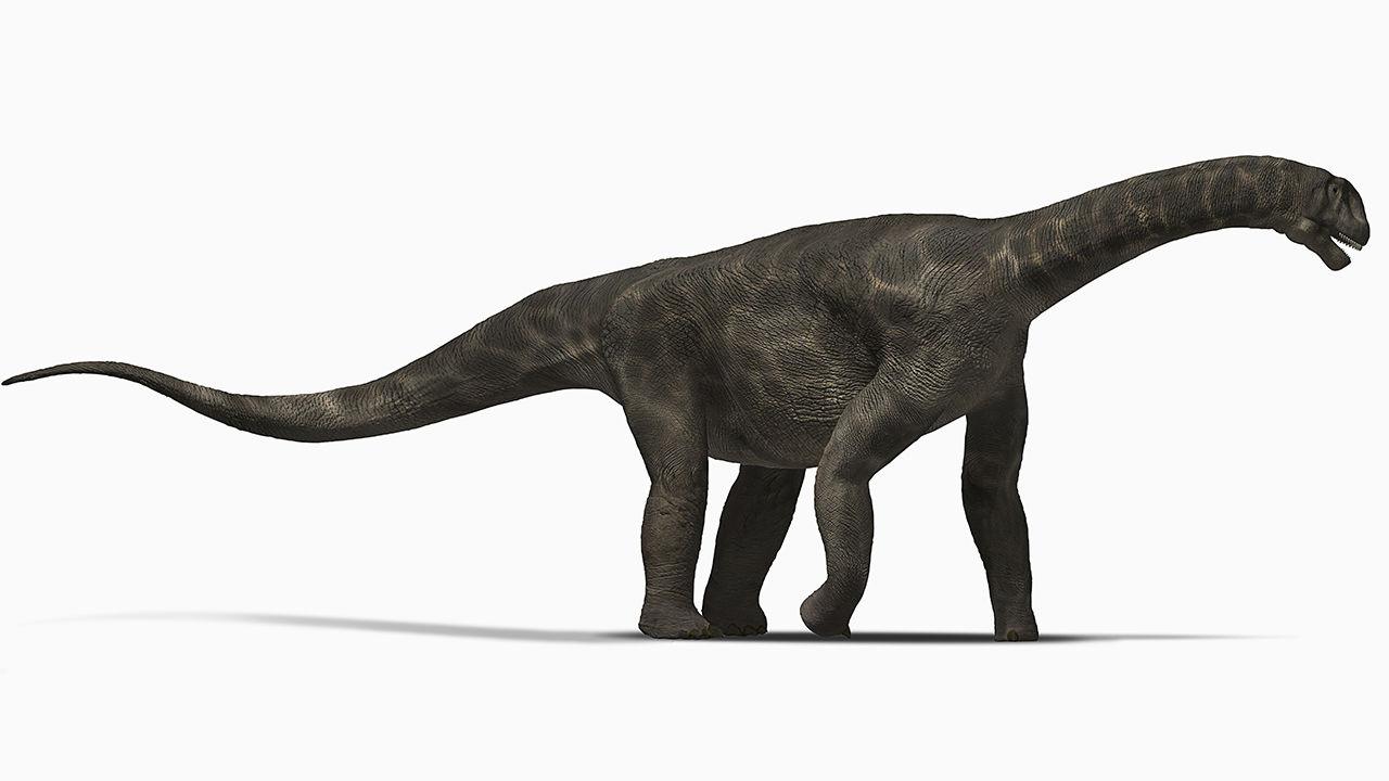 sauropode-1280x720.jpg (82 KB)